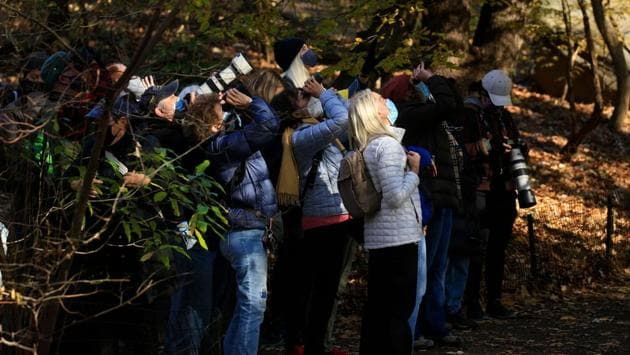 Bird watchers use binoculars and cameras to watch a Great Horned Owl at the Ramble in Central Park, New York on November 29. Each year some 220 bird species frequent Central Park, which remarkably is considered one of the best spots in the world for birding despite the city's 8.6 million residents, AFP reported. (Kena Betancur / AFP)