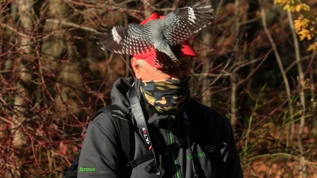 """A Red-Bellied Woodpecker attempts to sit on DeCandido's hat as he leads a group of bird watchers during a tour in Central Park, New York on November 29. """"There's fewer things to do in New York City -- and the things that you could do inside are either limited or cancelled,"""" Robert DeCandido, also known as Birding Bob, told AFP. (Kena Betancur / AFP)"""