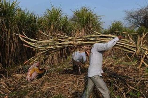 The components of a biofuel supply chain create a circular rural economy that results in substantial environmental, socio-economic and health benefits for communities(AFP)