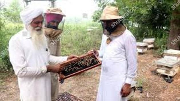 Farm-grown honey is available at a price of ₹145 per kg at this time while last year it was available at ₹95 (unbranded)(Representative Image/ HT File Photo)