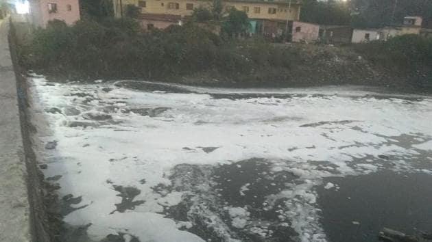 A foaming Waldhuni near Samrat Ashok Nagar.(Sourced)