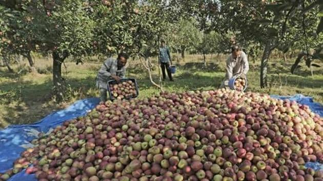 Kashmiri fruit growers have said they support the Bharat Banch called by farmers.(HT FILE PHOTO)