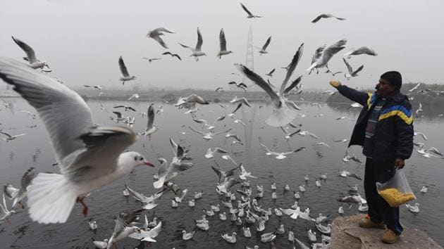 Bird feeding must be phased out, just like petting zoos are mostly done.(Sonu Mehta/HT file photo)