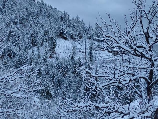 An apple orchard after fresh snowfall covered the hills with a white blanket in the upper Shimla area on Saturday.(HT Photo)