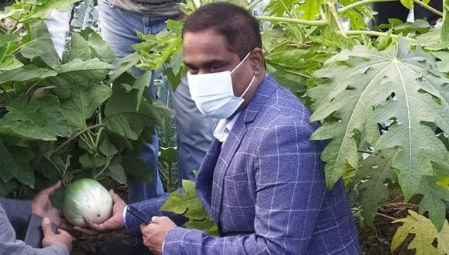 APEDA chairman Dr M Angamutham in a field of Ramnagar Brinjal in Varanasi.(Sourced)