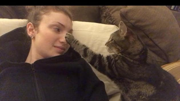 The image shows a cat 'booping' a woman.(Reddit)