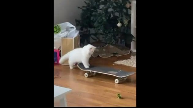 The image shows Yeti riding a skateboard.(Instagram)