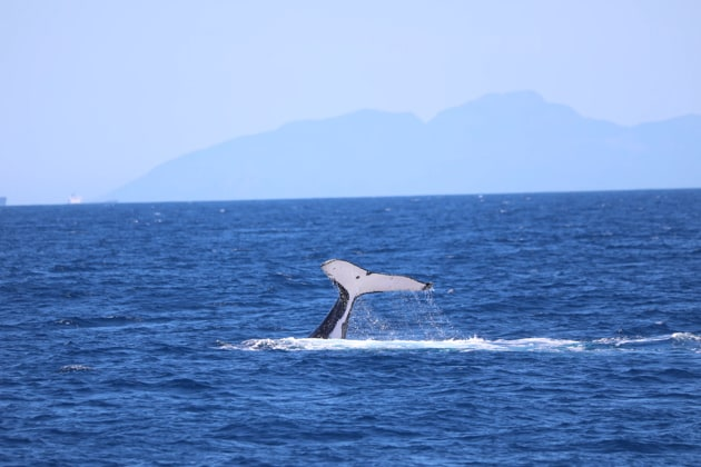 The researchers believe they have discovered what is likely a previously unrecognised population of blue whales in the western Indian Ocean.(Unsplash)