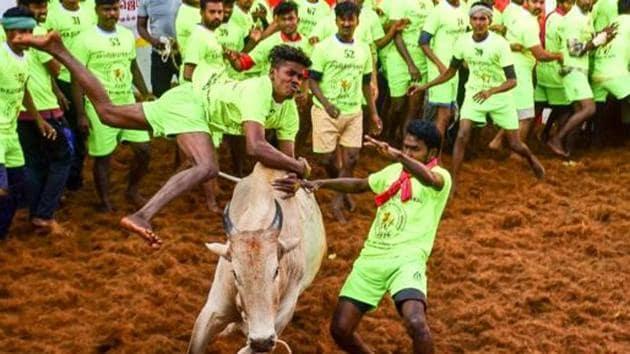Participants attempt to tame a bull during Jallikattu, in Madurai.(PTI)