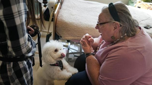Eileen Nagle, 79, talks with Zeus, a bichon frise, as he visits her room at The Hebrew Home.(AP)