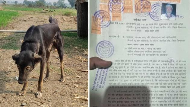 The dog that farmer Omnarayan Verma named in his will as his heir.(HT PHOTO)