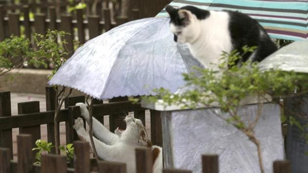 """Street cats """"Flower,"""" left, and """"Pipi"""" wait to be fed a Midnight Cafeteria in Taipei, Taiwan.(AP)"""