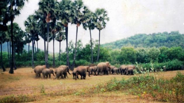 According to the villagers, wild animals including wild boars, jackals, rabbits and many birds have made the forest their home. Every year a herd of around a dozen elephants also come and stay in the forest for some months.(HT PHOTO.)