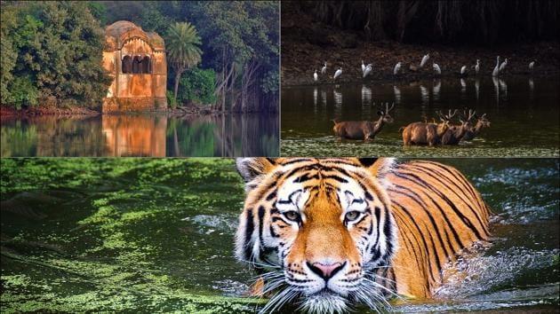 5 Ranthambore attractions, from Royal Bengal Tiger to Padmavati's sati site(Twitter/ranthamborepark)