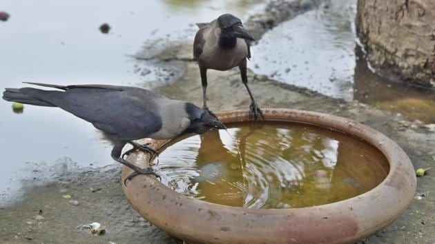 Death of crows in Rajasthan's Jhalawar has been confirmed the presence of the Bird Flu virus.(Sushil Kumar/HT PHOTO)