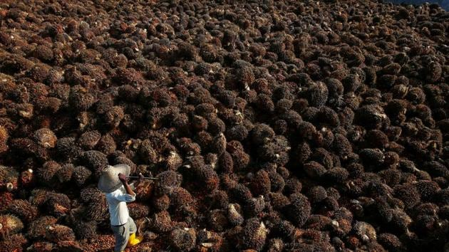 Global palm oil supply is expected to be tight this year because of heavy rains caused by the La Nina weather pattern.(Reuters file photo)