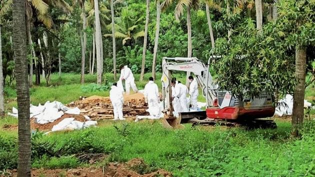 Animal husbandry department workers cull ducks following detection of avian influenza, at a place in Kottayam district of Kerala, on January 6.(PTI)