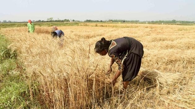 Kiran Devi's agricultural company is now procuring crops from farmers without any middlemen involvement.(HT photo)
