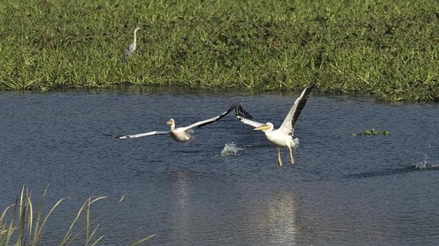 The Okhla Bird Sanctuary spreads over 400 hectares and recorded 21,061 water-birds of 115 species as per the annual census held by the forest department in February 2020 for the birding year of 2019-20.(HT PHOTO.)