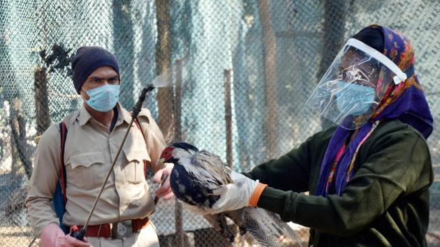 A worker sprays disinfectant on a bird as a precautionarymeasure.(Representational image/PTI)