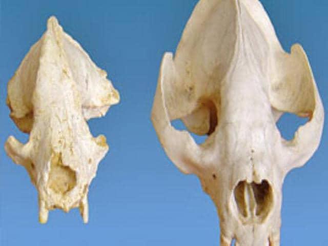 skull,bones,fossils