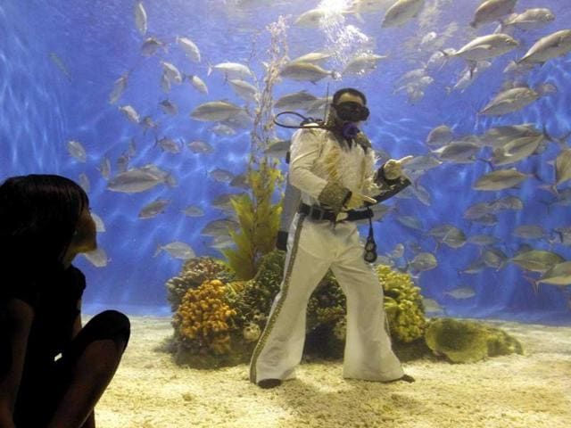 A visitor watches as a professional diver wearing an Elvis Presley attire poses inside an aquarium of the Ocean Park in Manila.