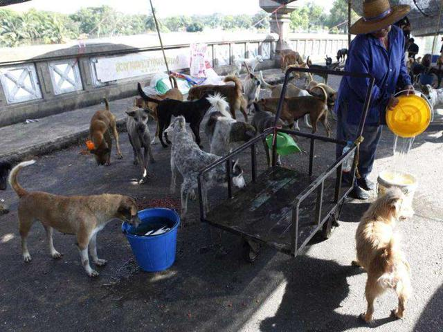 Stop-Gaps,Welfare of Stray Dogs,Hindustan Times