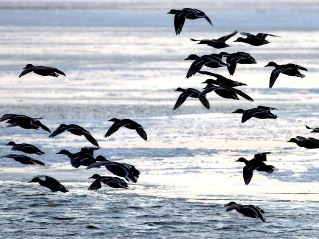 alwar,migratory bird,World Wetland Day