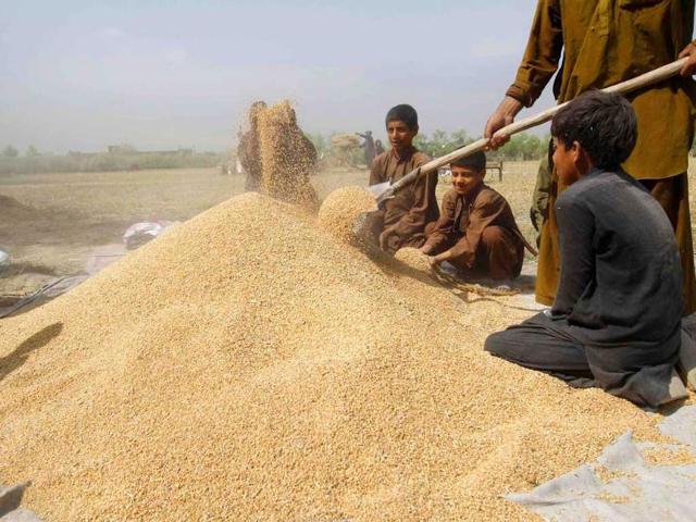5 lakh mt,wheat,homeless