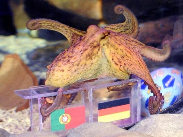 psychic animals,Paul the octopus,Germany