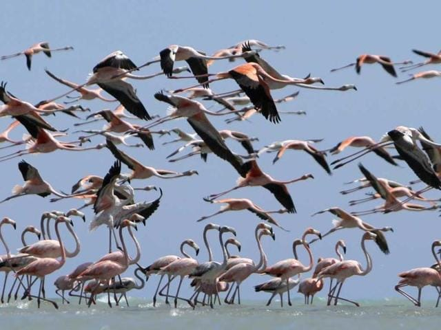 Flamingos-fly-over-the-waters-of-a-reserve-at-a-flamingo-valley-near-the-town-of-Manaure-Guajira-province--Reuters-photo-Joaquin-Sarmiento