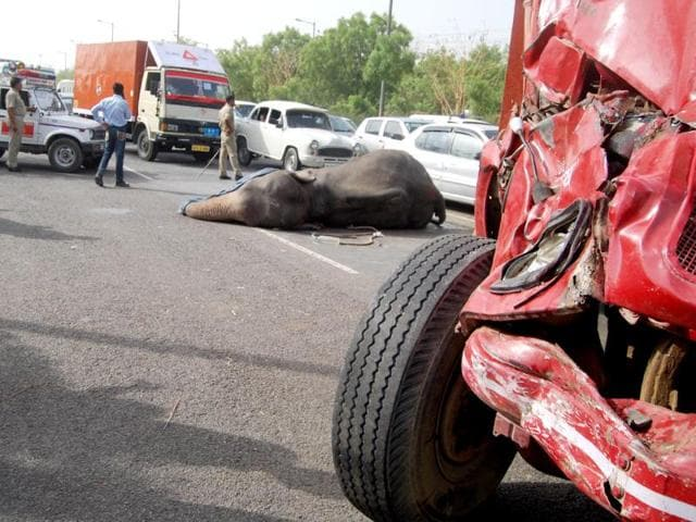 An-elephant-was-killed-while-another-was-injured-when-a-speeding-truck-hit-them-from-behind-near-Mahamaya-flyover-at-5-30am-in-Noida-HT-Sunil-Ghosh