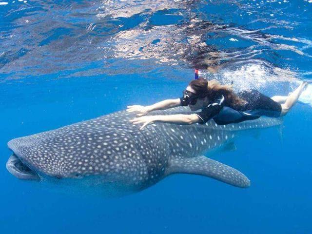 Japan kills 251 minke whales in final Antarctic hunt