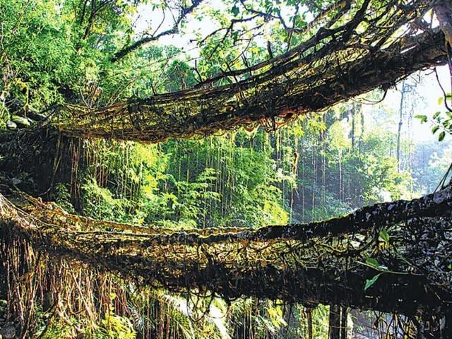 Living-Root-Bridge-Meghalaya