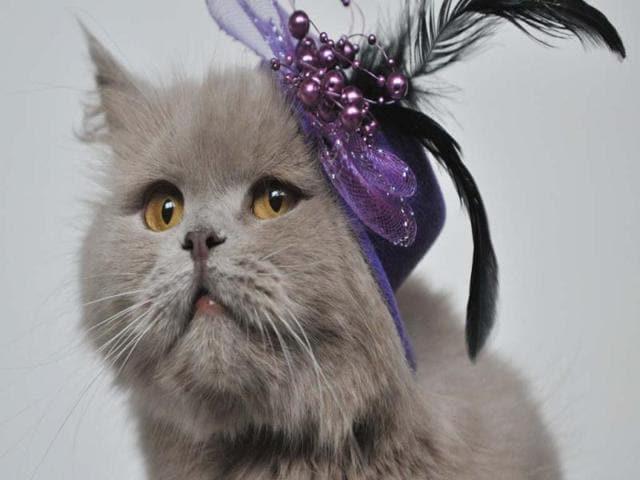 A show of perfect and 'not so perfect' felines
