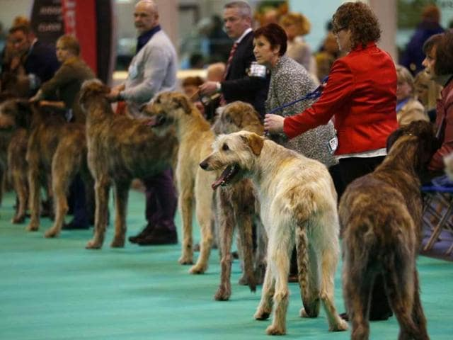 Murder at Crufts,Cruft Dog show
