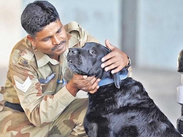 The-forgotten-heroes-of-26-11-sniffer-dogs-are-living-in-a-retirement-home-surviving-on-scraps-HT-file-photo
