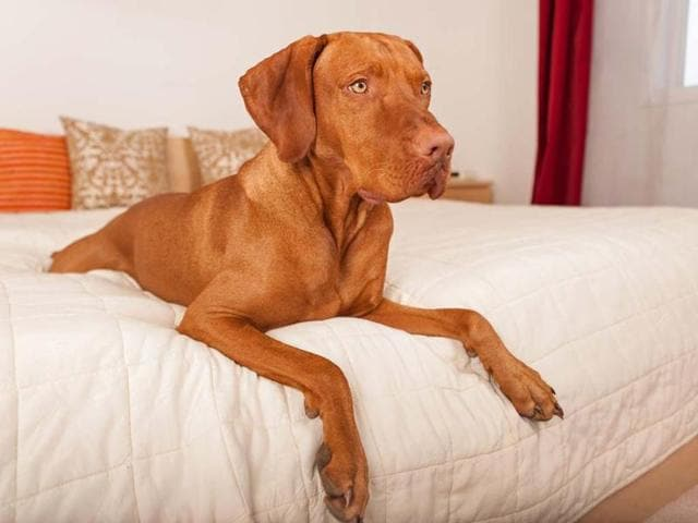 DogFriendly-com-has-compiled-a-list-of-the-top-pet-friendly-destinations-and-hotels-for-your-pooch-Photo-AFP-Barna-Tanko-shutterstock-com