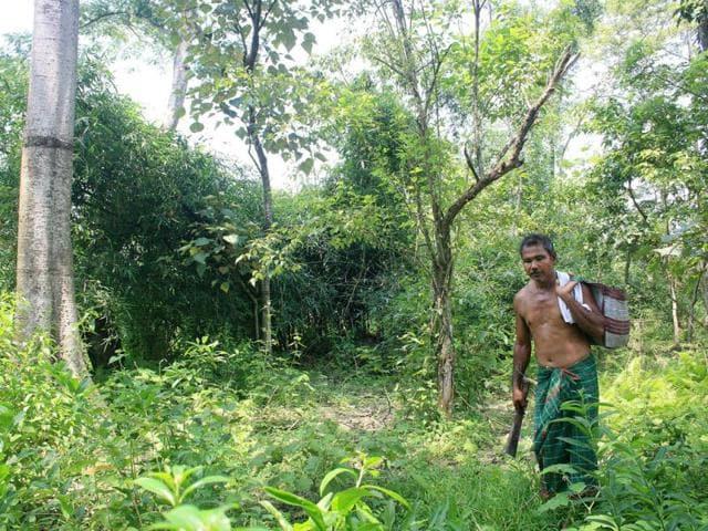 world environment day,Jadav Payeng,National green India mission