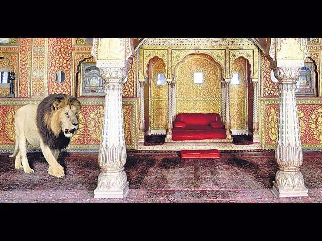 Exotic-Aliens-The-Lion-and-the-Cheetah-in-India-Photo-credit-Koushub-Sharma-and-Valmik-Thapar