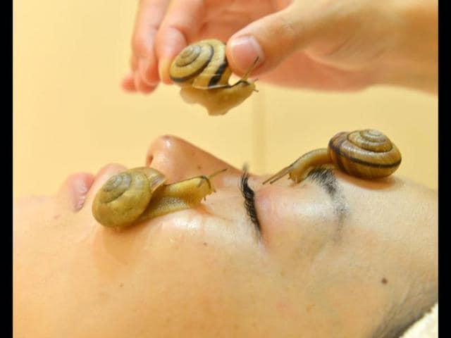 snails,snail slime,snail for beauty treatment