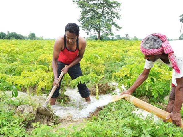 techie takes up farming