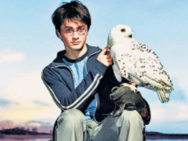 Key-to-success-Patience-and-ingenuity-are-must-for-animal-trainers-believes-Julie-Tottman-who-has-prepared-animals-for-roles-in-the-Harry-Potter-films-and-Casino-Royale-to-name-a-few
