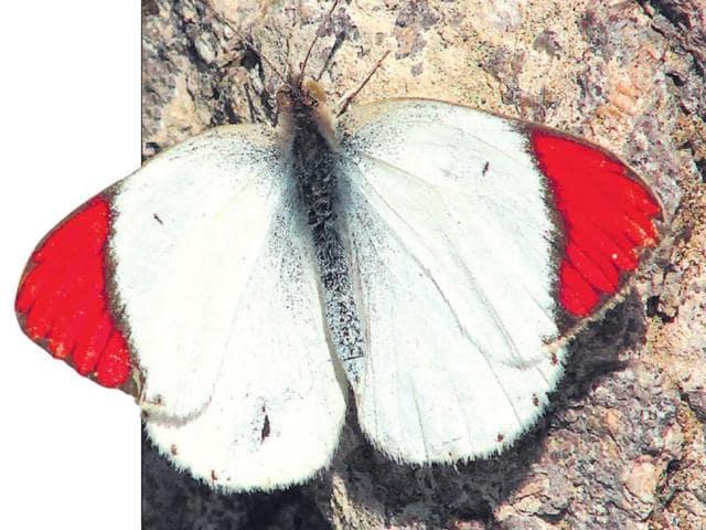 butterflies,nature,Faiyaz A Khudsar
