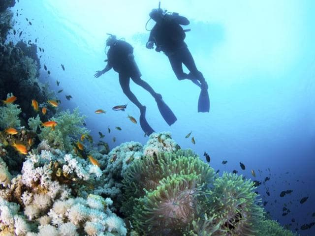 Exploring-sea-Oceanography-is-for-those-who-can-make-sense-of-not-just-the-shy-goings-on-in-and-outside-the-waters-but-also-delve-into-sea-life-for-man-s-benefit