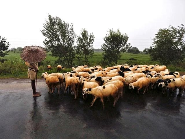 A-shepherd-holds-an-umbrella-as-he-stands-on-a-highway-with-his-flock-in-Srikakulam-district-in-the-southern-Indian-state-of-Andhra-Pradesh-Reuters-Photo