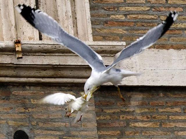 white doves,pope,hunted doves