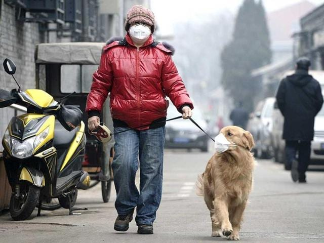 A man and his dog, both wearing masks, walk along a small alley on a hazy day in Beijing, February 23, 2014. (Reuters Photo)