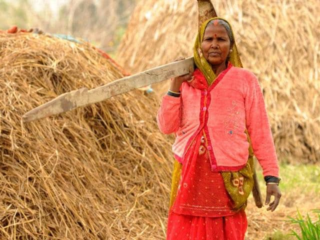 In-Sarpataha-village-35-km-from-Gorakhpur-city-Ramrati-Devi-is-a-model-farmer-Ashok-Dutta-HT-Photo