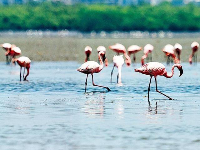 birds,Ulwe and Uran Nagla Forest,Tungareshwar sanctuary